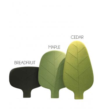 Leaf Cedar